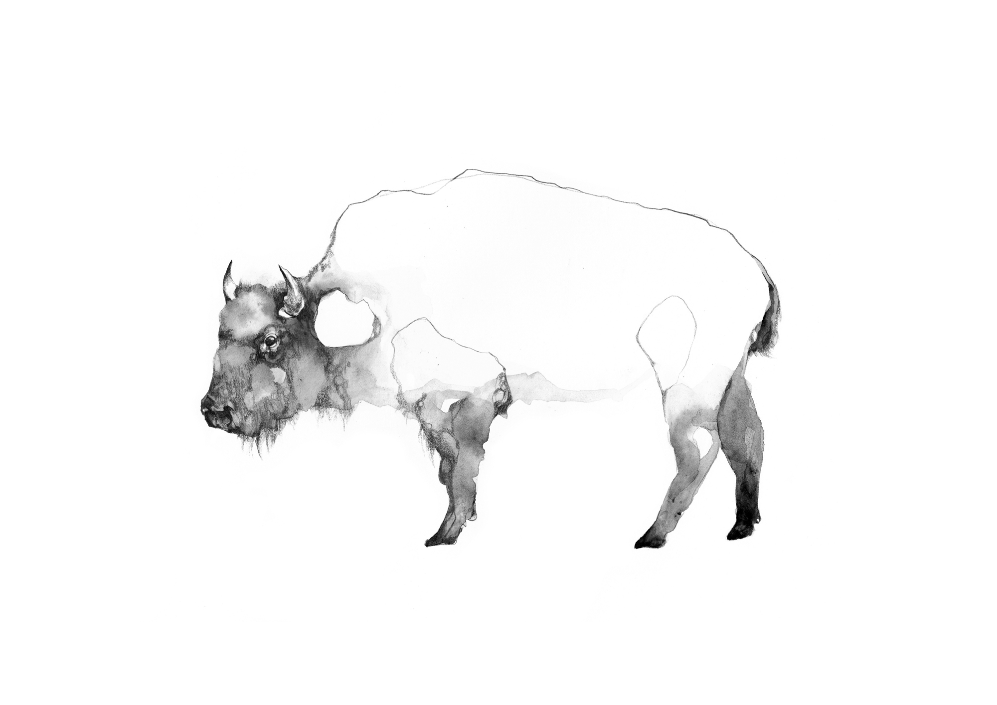 1-Bec_Kilpatrick_Illustration_Sea_Landbison1