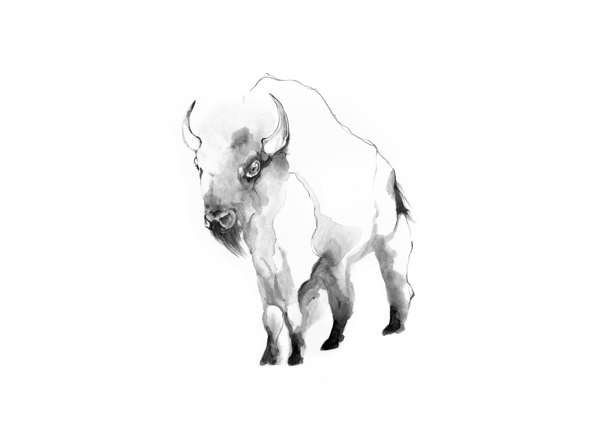 4-Bec_Kilpatrick_Illustration_Sea_Landbison3
